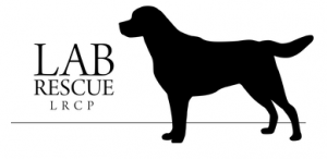 LRCP and Fairfax Animal Hospital